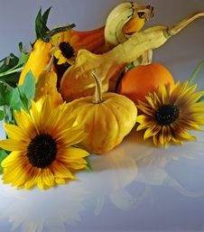 Free Pumpkins With Sunflowers Royalty Free Stock Image - 3154616