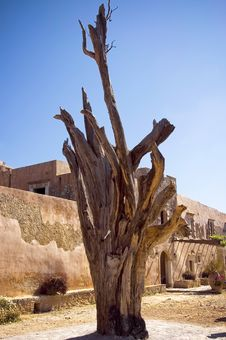 Free Monastery Gnarly Tree Royalty Free Stock Images - 3157239