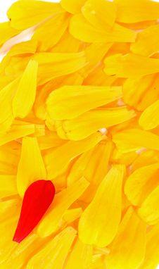 Free YellowPetals Royalty Free Stock Image - 3159286