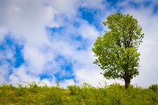 Free Landscape With Tree On Flank Of Hill Stock Photos - 31505353