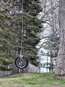 Free Tire Swing Stock Image - 31508631