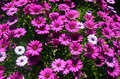 Free Flowers Stock Photography - 31512582