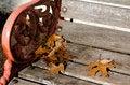 Free Autumn Season Stock Images - 31517964