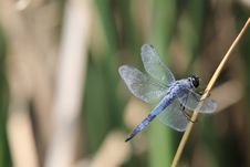 Dragonfly On Leaf Royalty Free Stock Photography