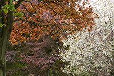 Free Beautiful Spring Colors Stock Photos - 31512353