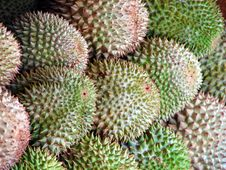 Free Durian Stock Image - 31513361