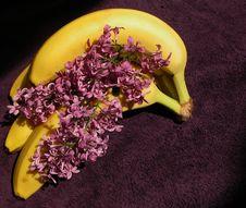 Free Lilas And Bananas Stock Image - 31515991