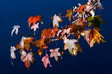 Free Autumn Season Royalty Free Stock Photo - 31517875