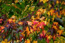 Free Autumn Season Royalty Free Stock Photography - 31518047