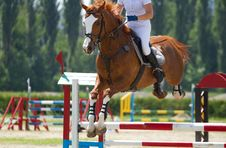 Free Equestrian Show Jumping Royalty Free Stock Photos - 31518558