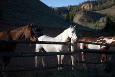 Free Horses Royalty Free Stock Photo - 31525075
