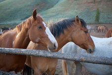 Free Horses Stock Images - 31525114