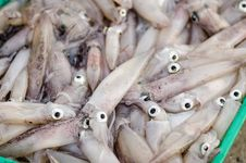Free Cuttlefish And Squid Stock Photos - 31525333