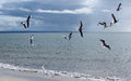 Free Flock Of  Graceful White Seagulls Flying Over The Sea Stock Images - 31532374
