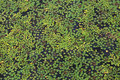 Free Floating Plants In A Pond Stock Photo - 31534390