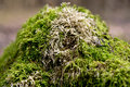 Free Moss On A Tree In The Forest Royalty Free Stock Images - 31537529
