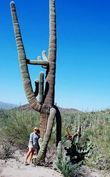 Free Saguaro National Park Giant Cacti-rider Royalty Free Stock Image - 31533086