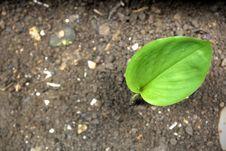 Free Green Leaf Stock Photo - 31536100