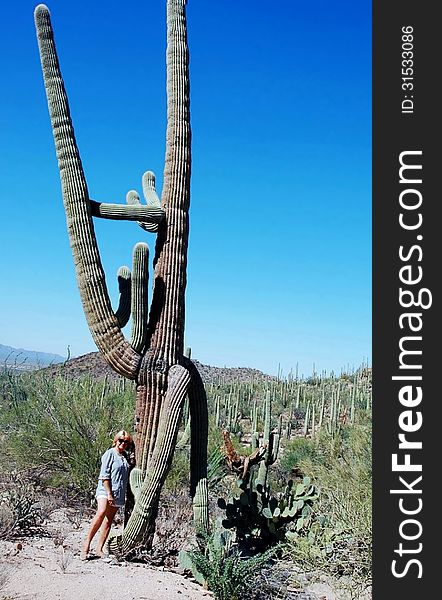 Saguaro national park giant cacti-rider