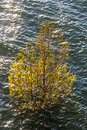 Free Flooded Tree In Swamp Royalty Free Stock Images - 31543439