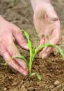 Free Seedling Stock Images - 31543664