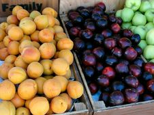 Free Summer Fruits Stock Image - 31542551