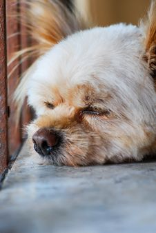 Free Sleeping Dog Stock Photography - 31553202