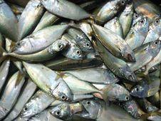 Free Fresh Fish Royalty Free Stock Image - 31555236