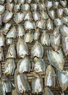 Drying Fish Royalty Free Stock Photo