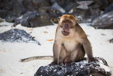 Free Thailand Monkey Royalty Free Stock Image - 31566086