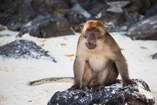 Thailand Monkey Royalty Free Stock Image