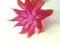 Free Christmas Cactus. Stock Image - 31564801