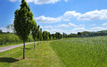 Free A Row Of Young Poplar Trees Between A Field And Lane Royalty Free Stock Image - 31577466