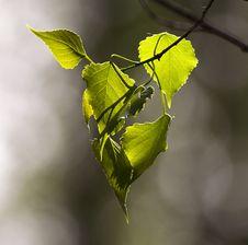Free Beautiful Leaves Stock Photo - 31573120