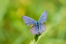 Free Blue Butterfly Stock Photo - 31575520