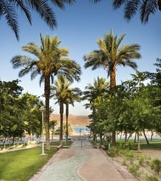 Free Alley Of Palms In Eilat, Israel Royalty Free Stock Images - 31584339