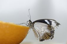 Free Butterfly On Orange Stock Photos - 31588583