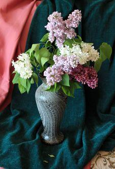 Free Lilac Posy Stock Image - 31588781