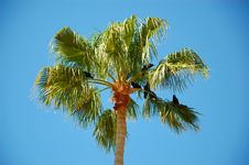 Free Palm Tree Royalty Free Stock Photo - 31588995