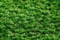 Free Grass As Background Stock Photos - 31591553