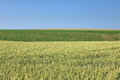 Free Rolling Fields Of Agricultural Land Royalty Free Stock Photography - 31592127