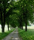 Free Wooden Alley In Spring Stock Images - 31594844