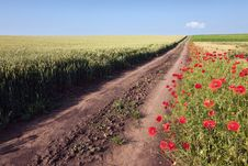 Free Dirt Road Through Cultivated Fields Royalty Free Stock Photo - 31590995