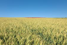 Field Of Wheat And Poppy Field At Top Of The Hill Royalty Free Stock Photography