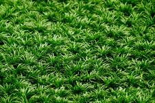 Free Grass As Background Stock Photos - 31591553