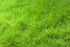 Free Grass Background Royalty Free Stock Photos - 31591568