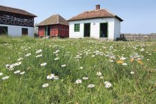 Rural Household In The Field Of Daisies Royalty Free Stock Image