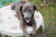Free Dog Royalty Free Stock Image - 31593736