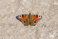 Free Butterfly On A Rock Royalty Free Stock Image - 31593876