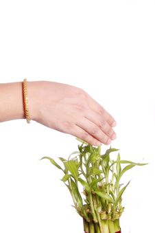 Woman S Hand Touching Leaves Stock Images